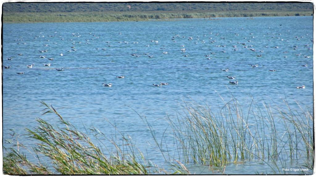 Ptice na Vranskom jezeru